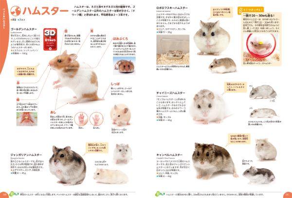 20191210_animal_sub2.jpg