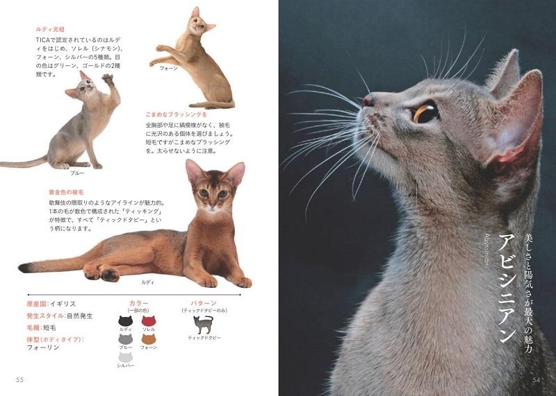 画像は、『世界中で愛される美しすぎる猫図鑑』(大和書房)より。思わず見とれてしまう