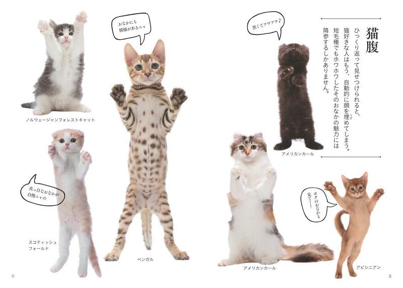 画像は、『世界中で愛される美しすぎる猫図鑑』(大和書房)より。「猫腹」をわかりやすく解説