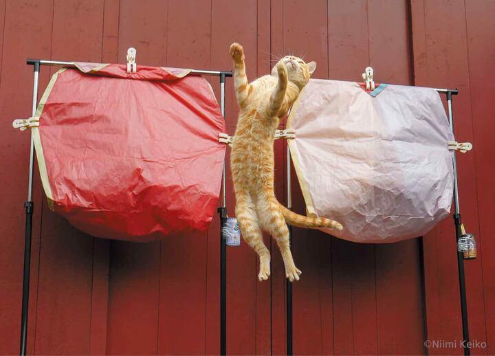 画像は、『世界の旅猫カレンダー2021』(辰巳出版)より(以下、同じ)。1月、台湾の十分(シーフェン)にて
