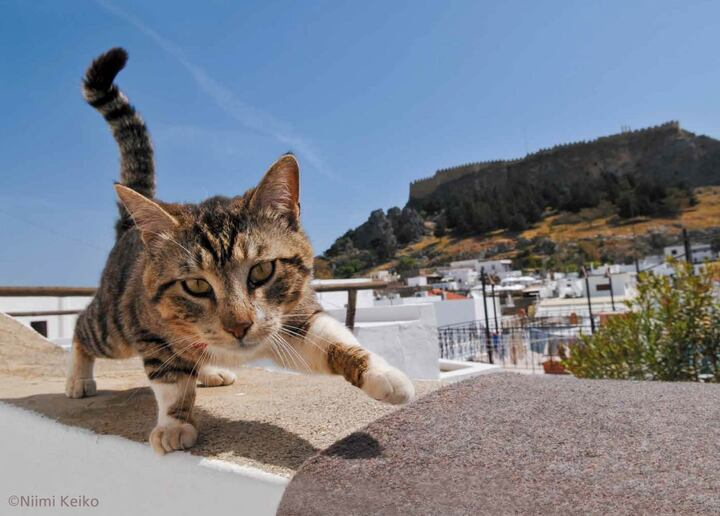11月、ギリシャのロドス島にて