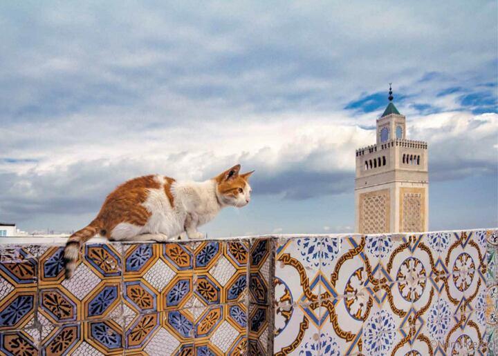 5月、チュニジアのチュニスにて