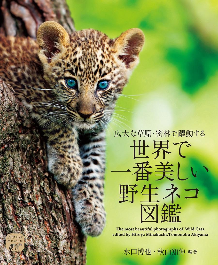 画像は、『世界で一番美しい野生ネコ図鑑』(誠文堂新光社)