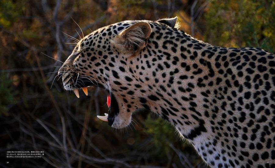 画像は、『世界で一番美しい野生ネコ図鑑』(誠文堂新光社)より(以下、同じ)