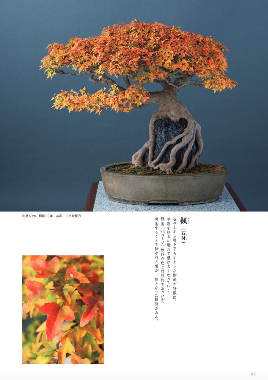 20210326_宮中の盆栽5.jpg