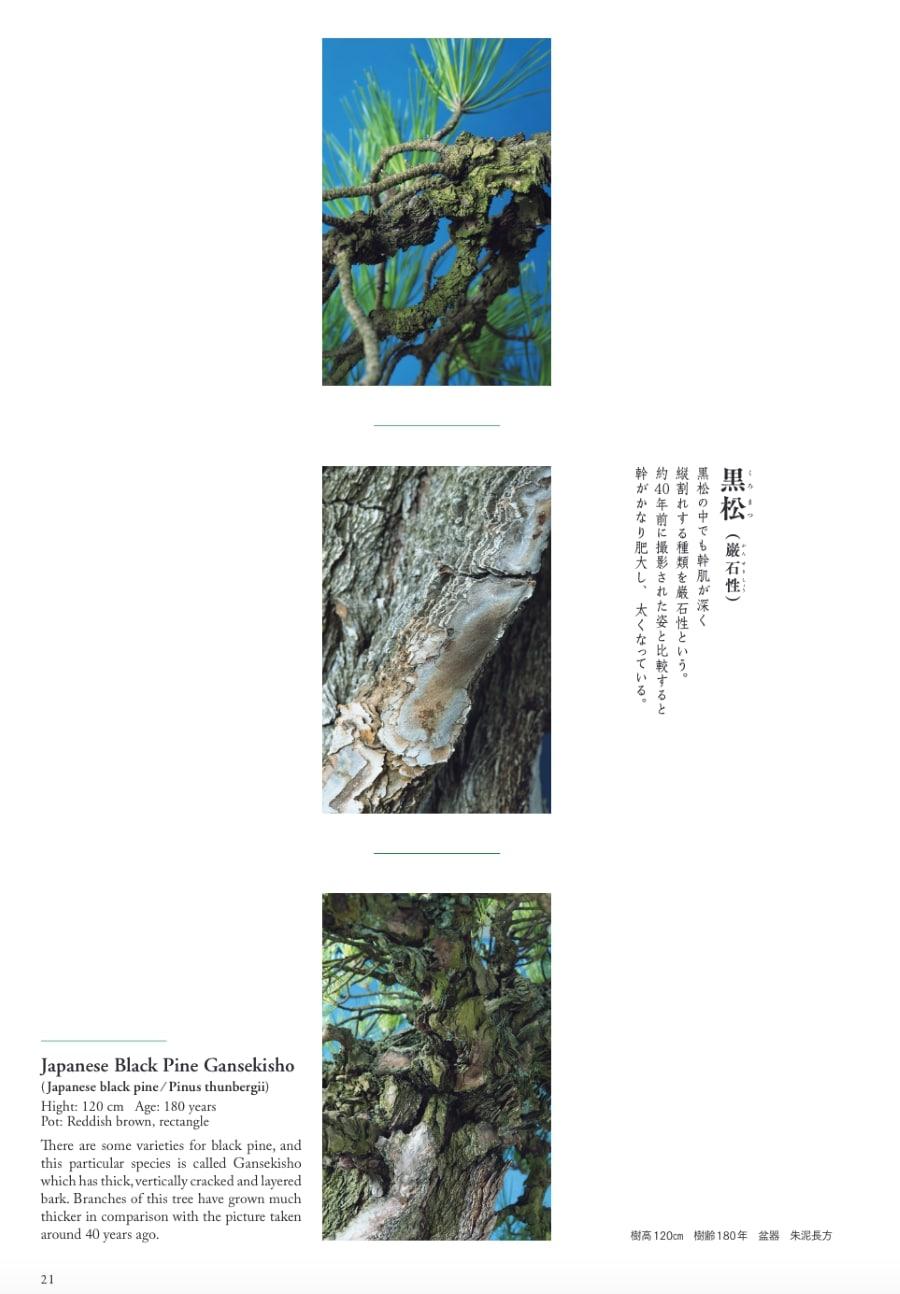 20210326_宮中の盆栽4.jpg