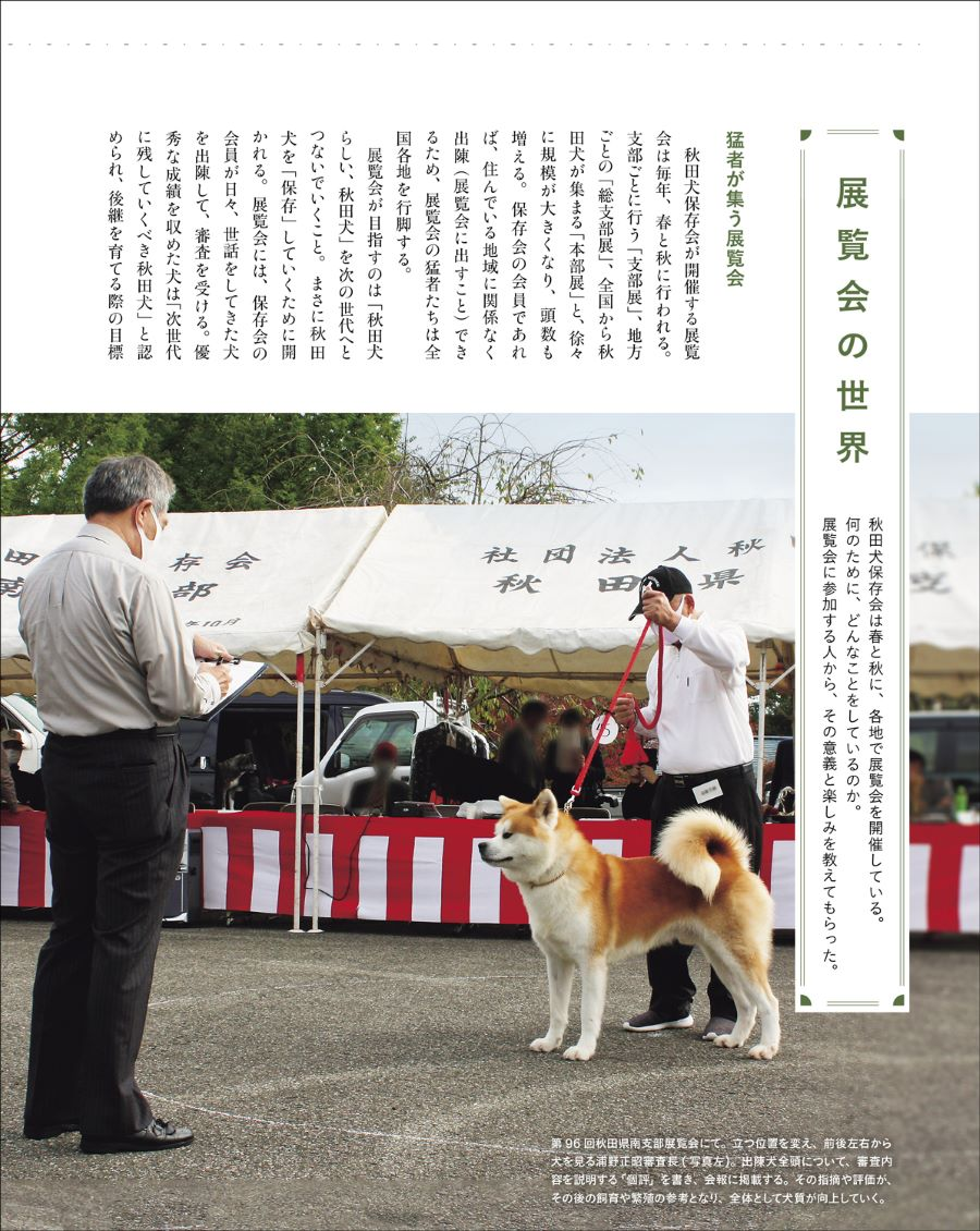 20210328_秋田犬と4.jpg