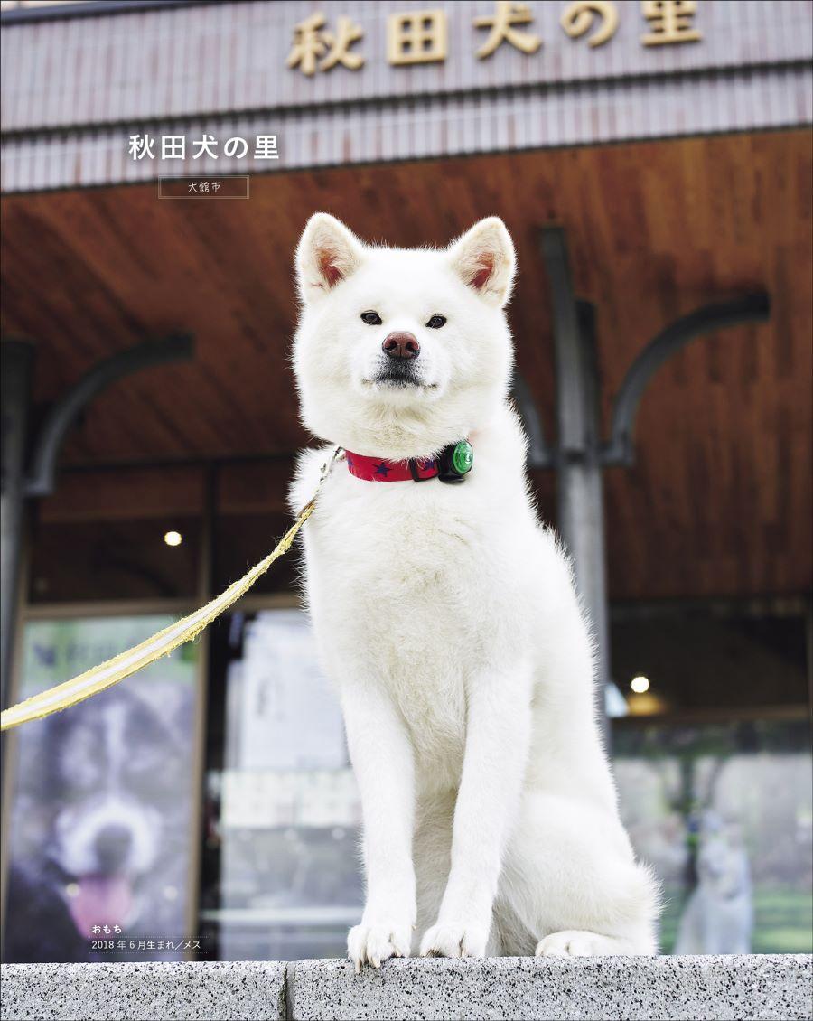20210328_秋田犬と2.jpg