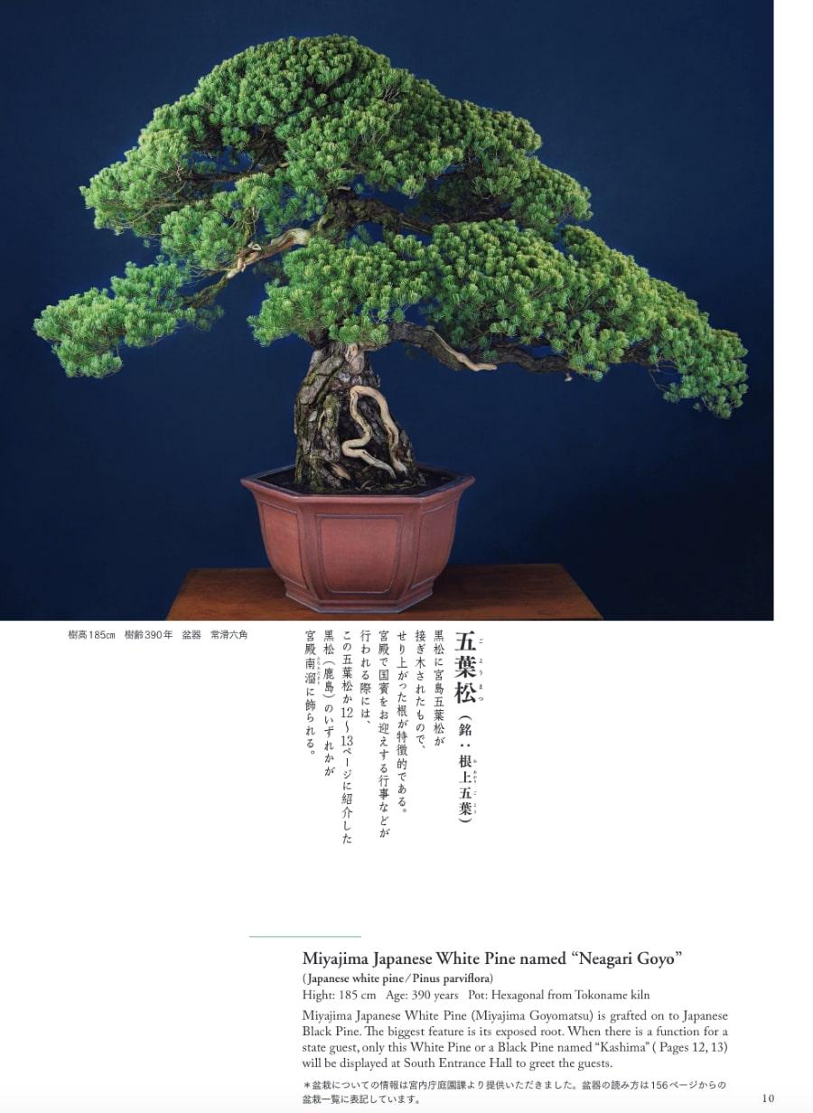 20210326_宮中の盆栽1.jpg