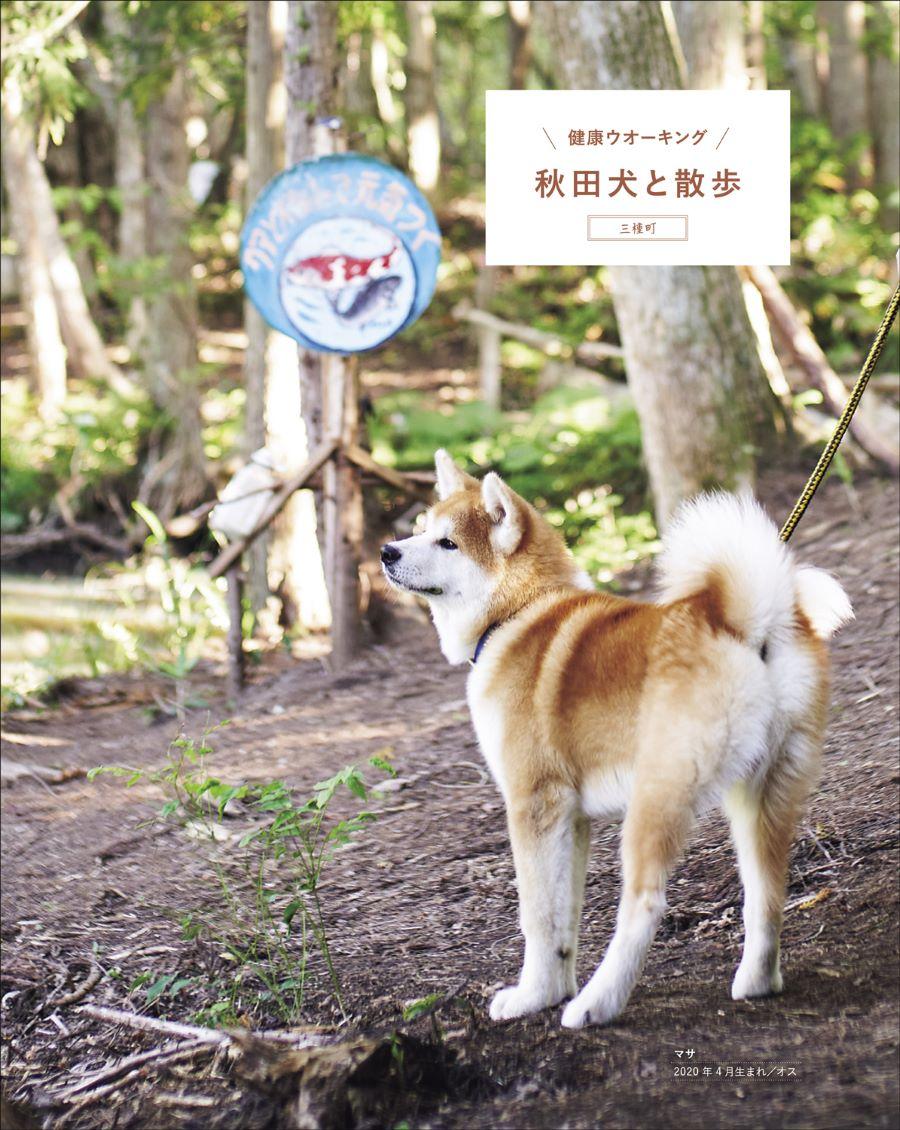 20210328_秋田犬と3.jpg