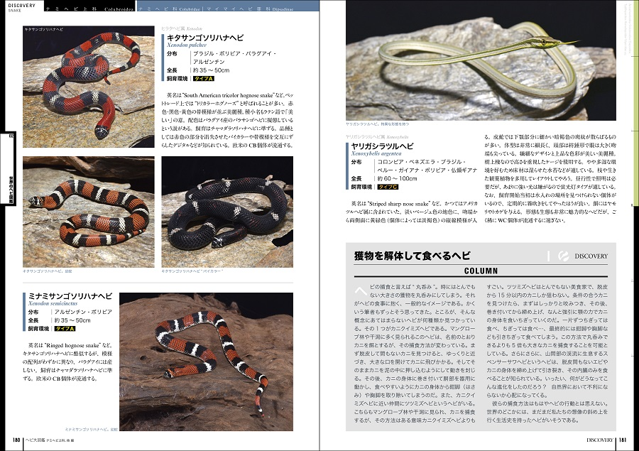 写真はキタサンゴソリハナヘビ等の解説ページ(提供:誠文堂新光社)
