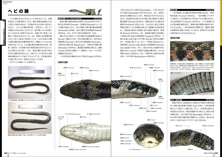 写真はヘビの鱗の解説ページ(提供:誠文堂新光社)