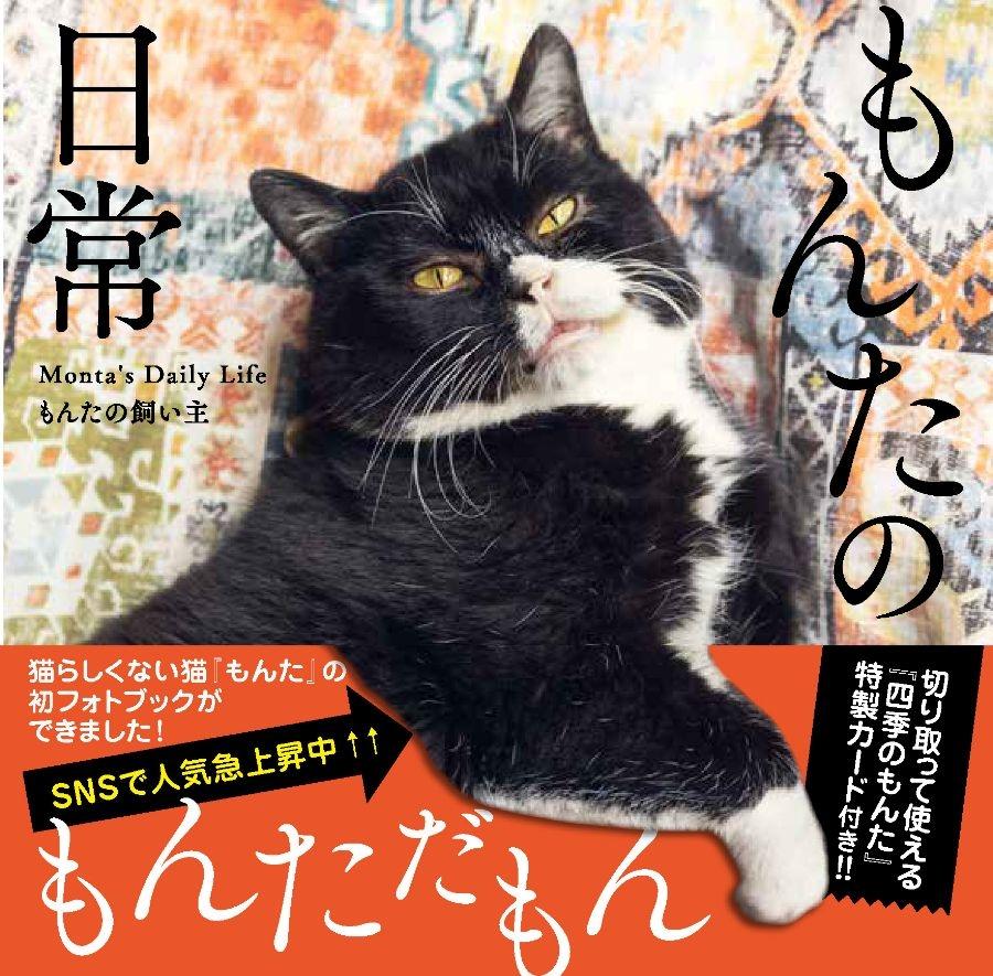 マイペースな猫のゆる~い日常 SNSで人気の猫のもんたのフォトブック