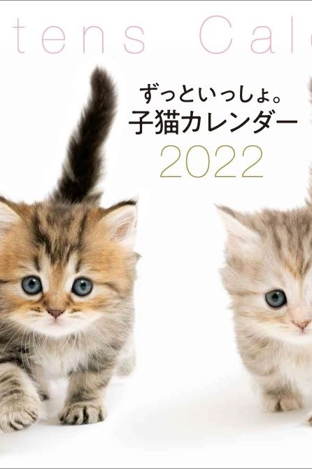 マンチカンにソマリ、ミヌエット...etc. 動画も楽しめる癒され子猫カレンダー